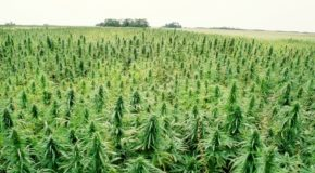 Pennsylvania Legalizes Hemp