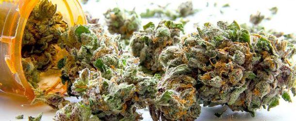 Medical Marijuana Has Potential As Alzheimer's Treatment, Study Says