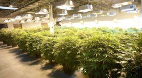 The Problem Plaguing Marijuana Legalization