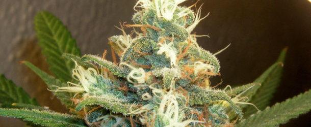 Study: Marijuana Relieves Pain Better for Men Than Women