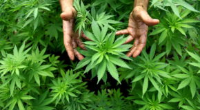 Kentucky Sheriff Trolls Hapless Marijuana Growers On Facebook
