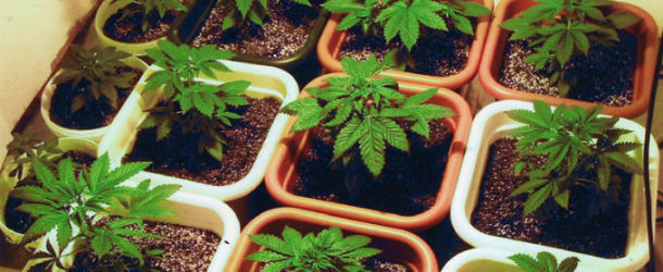 First Public Pot Display Goes Up in the U.S.