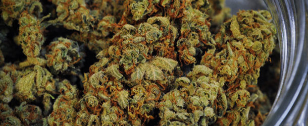 Humans Apparently Discovered Weed 10,000 Years Ago